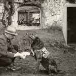 11 Animals In The War Effort