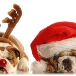 狗狗的聖誕美食 – 搗蛋的淘氣鬼