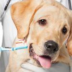 健康的牙齒可令你的寵物更長壽!